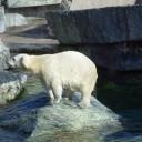 Leer alles over de geschiedenis van Wilhelma, Zoo in Stuttgart - deel 1 - in deze tweedelige cursus.