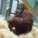 Imparate tutto sulla storia di Wilhelma, Zoo di Stoccarda - Parte 2 - in questo corso in due parti.