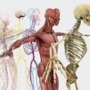 Lerne Grundbegriffe der Anatomie