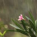 Algemene informatie over het regenseizoen in Bali op Indonesië en een kort overzicht van het fantastische eten en de gerechten op Bali.