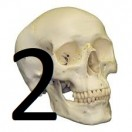 In this lesson you will get to know 160 of the most important bones in the human body by means of pictures. Part 2 of 2