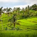 Informations générales sur la saison des pluies à Bali sur l'Indonésie, ainsi qu'une courte vue de la nourriture et des plats fantastiques à Bali.